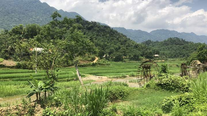 """50 shades of green"" in Vietnam"